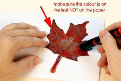MY LITTLE LEAF BOOK – Shape, Contrast, Pattern - Step Four