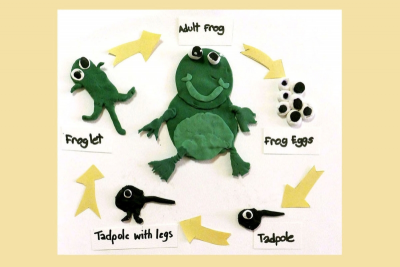 LIFE CYCLE OF A FROG – Shape, Colour Mixing - Step Seven