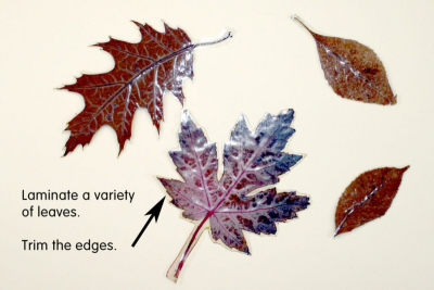 MY LITTLE LEAF BOOK – Shape, Contrast, Pattern - Step One
